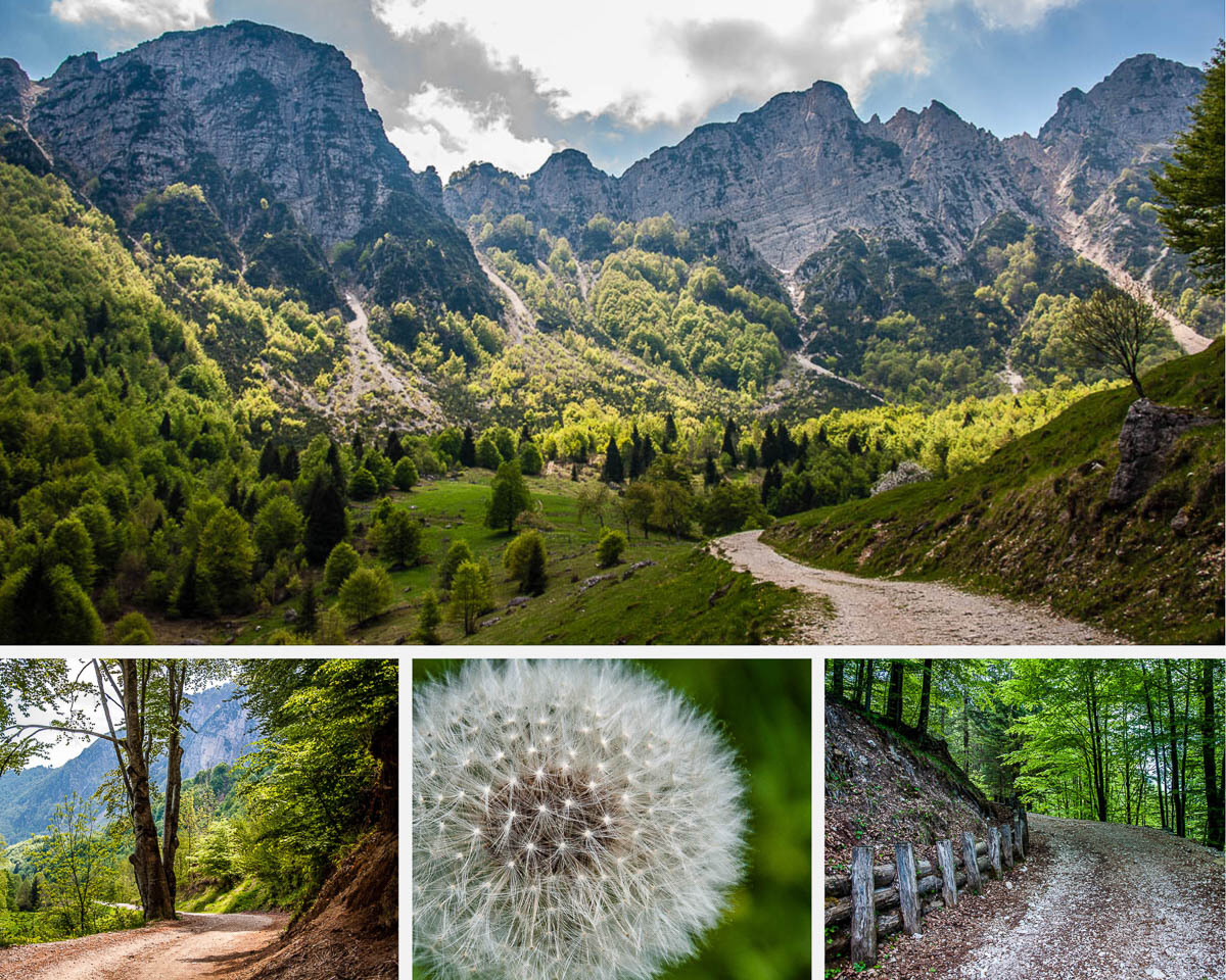 Walking the Path of the Big Trees - Sentiero dei Grandi Alberi - An Easy Hike in the Little Dolomites in Northern Italy - rossiwrites.com